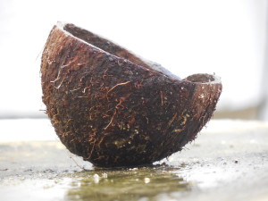 coconut oil vegan diet